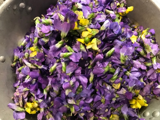Purple and yellow violet blooms in a colander