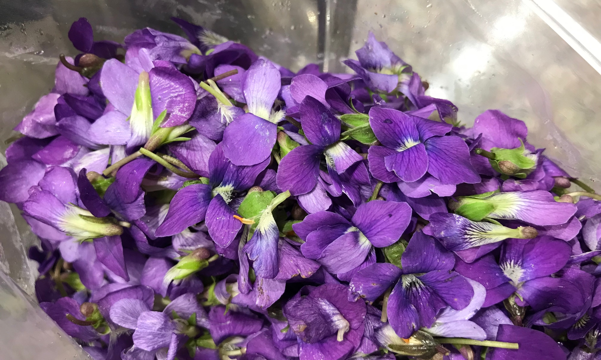a plastic bag that is about half full of freshly picked violet flowers